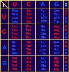 Таблица соответствия Ф.Кирка
